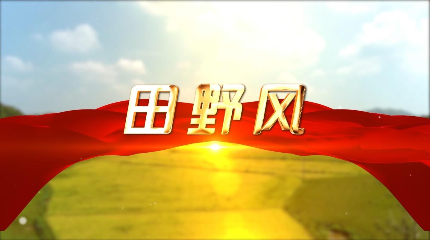 【田野风】郝家桥的蜕变